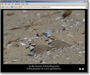 Plover Photo Essay Slideshow